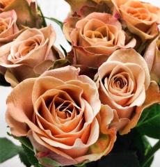 Роза чайно-гибридная Капучино